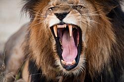 動物の歯 Part1
