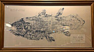 初めての沼津港深海水族館レポ